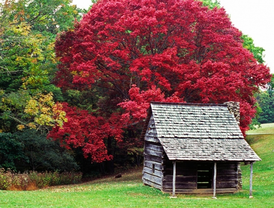 United States A Red Tree From Blue Ridge Parkway